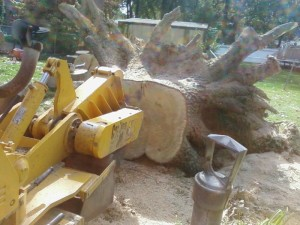 Stump Grinding in Ohio